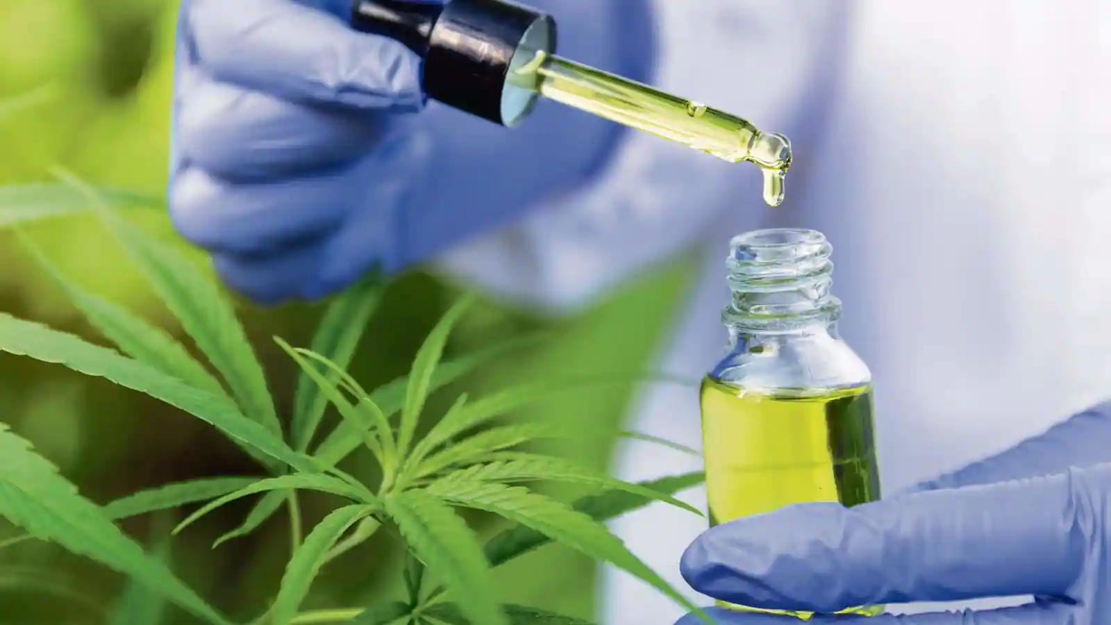Find out which conditions you must meet for the CBD Purchase (Achat CBD) in France to be effective