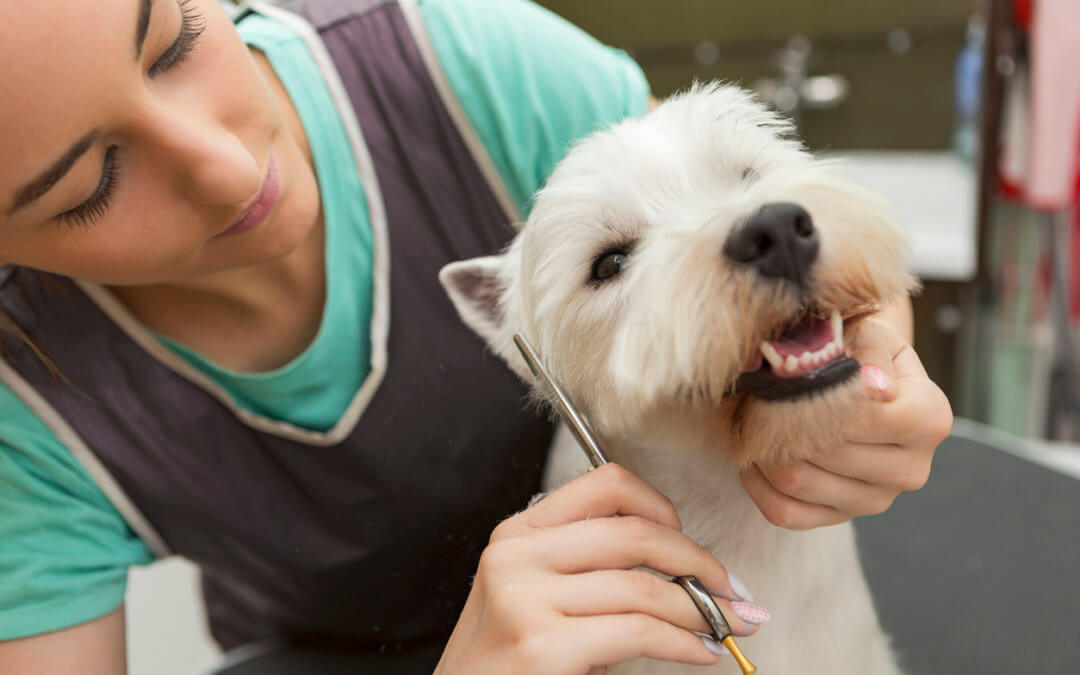 Understanding things about dog grooming